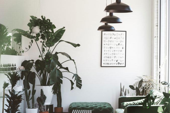 Koneko Studio